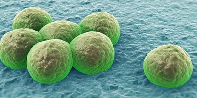 Global pledge to stamp out drug-resistant infections