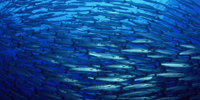 New partnership to protect ocean resources