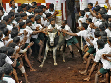 Jallikattu: Even if there is a revocation, Tamil people should ensure sport is strictly regulated