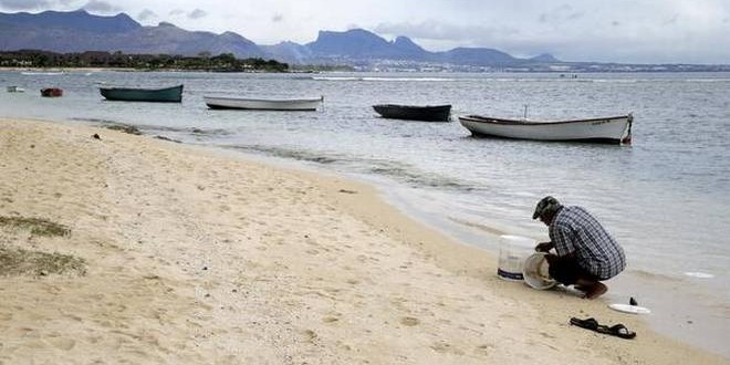 'Lost continent' found lurking under Mauritius