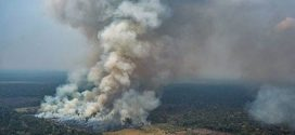 Amazon Forest Faces Threat From Fires, Mining, Land Occupation And Logging